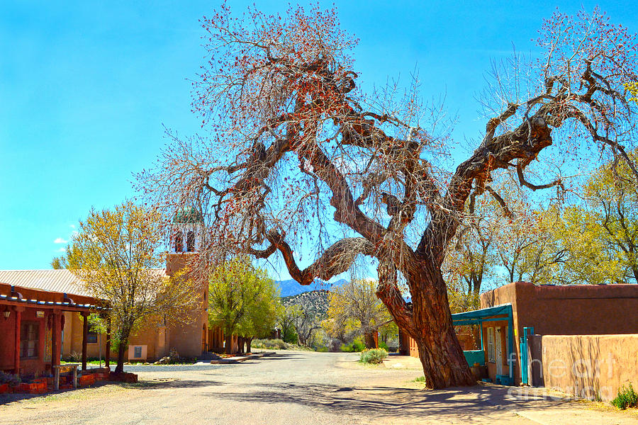 Cerrillos Photograph - The Hanging Tree In Cerrillos In New Mexico  by Catherine Sherman