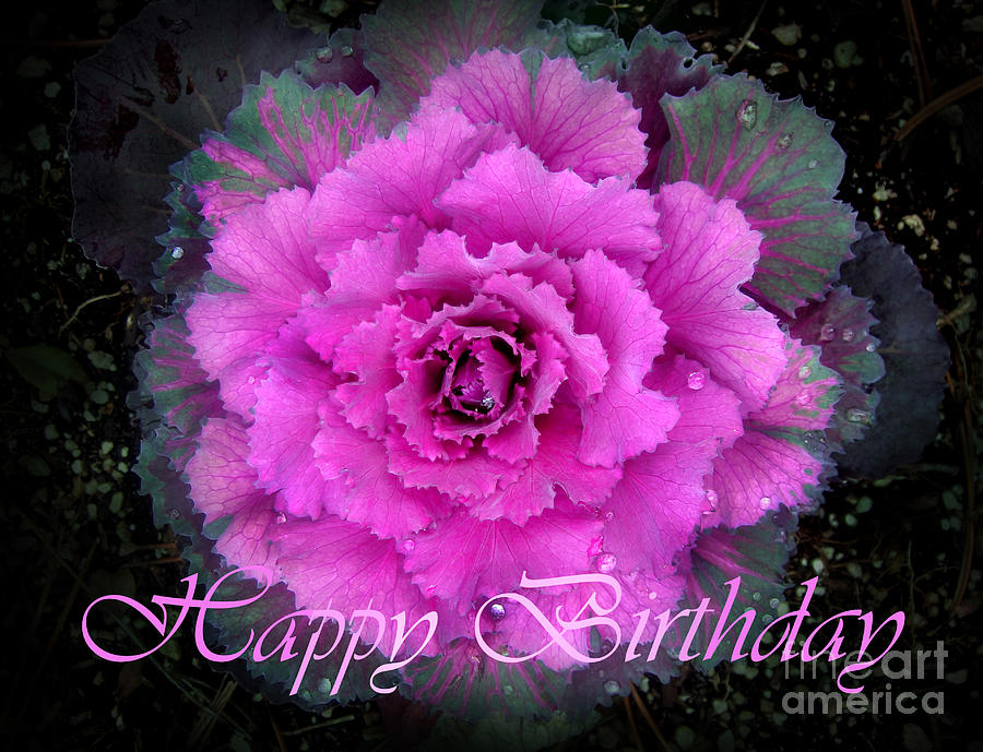 Happy birthday card kale flower photograph by sofia metal queen kale photograph happy birthday card kale flower by sofia metal queen bookmarktalkfo Gallery