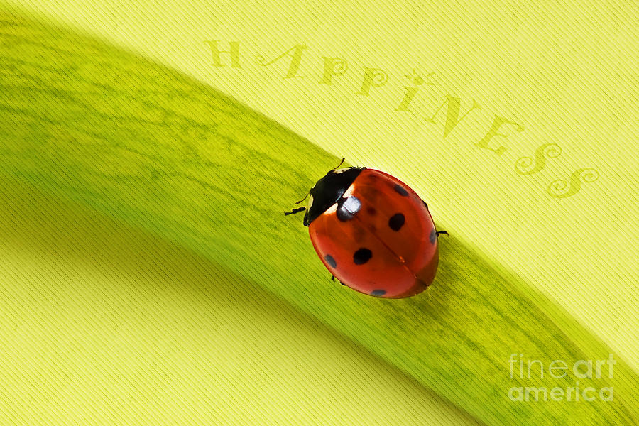 Ladybug Photograph - Happiness by Angela Doelling AD DESIGN Photo and PhotoArt