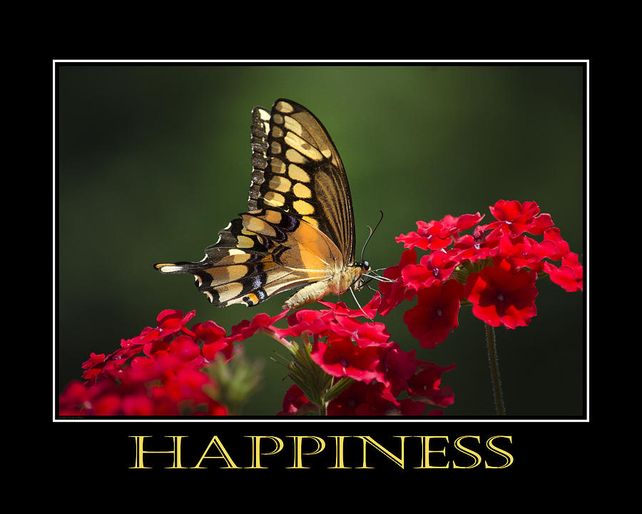 Happiness Photograph - Happiness Inspirational Poster Art by Christina Rollo