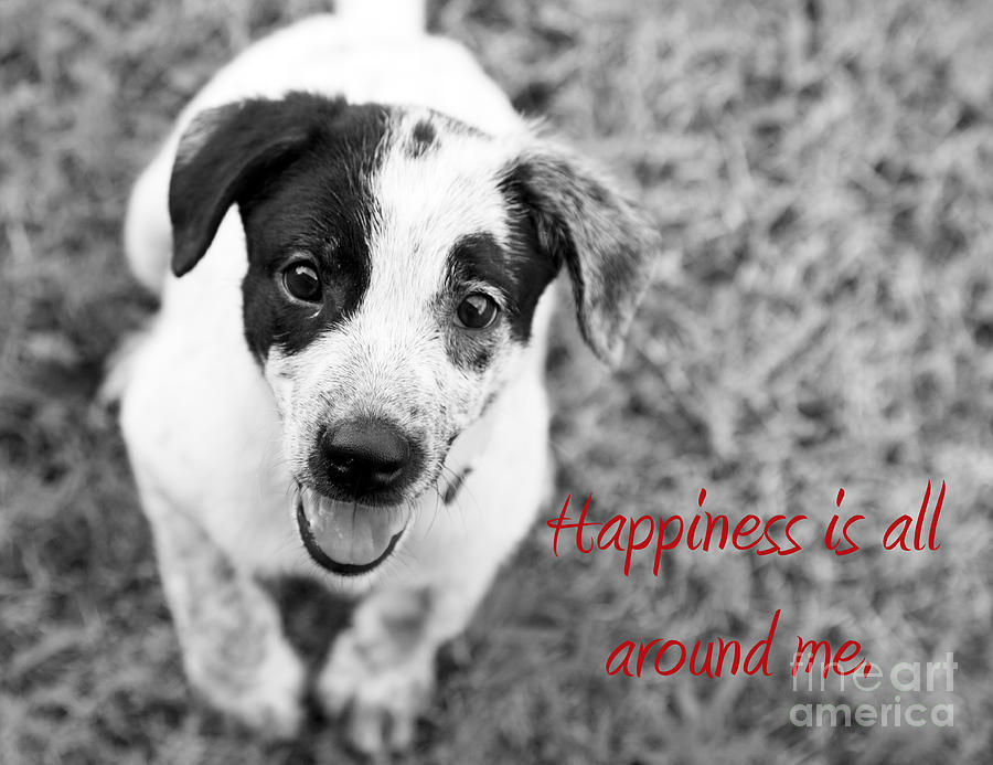 Puppy Photograph - Happiness Is All Around Me by Amanda Barcon