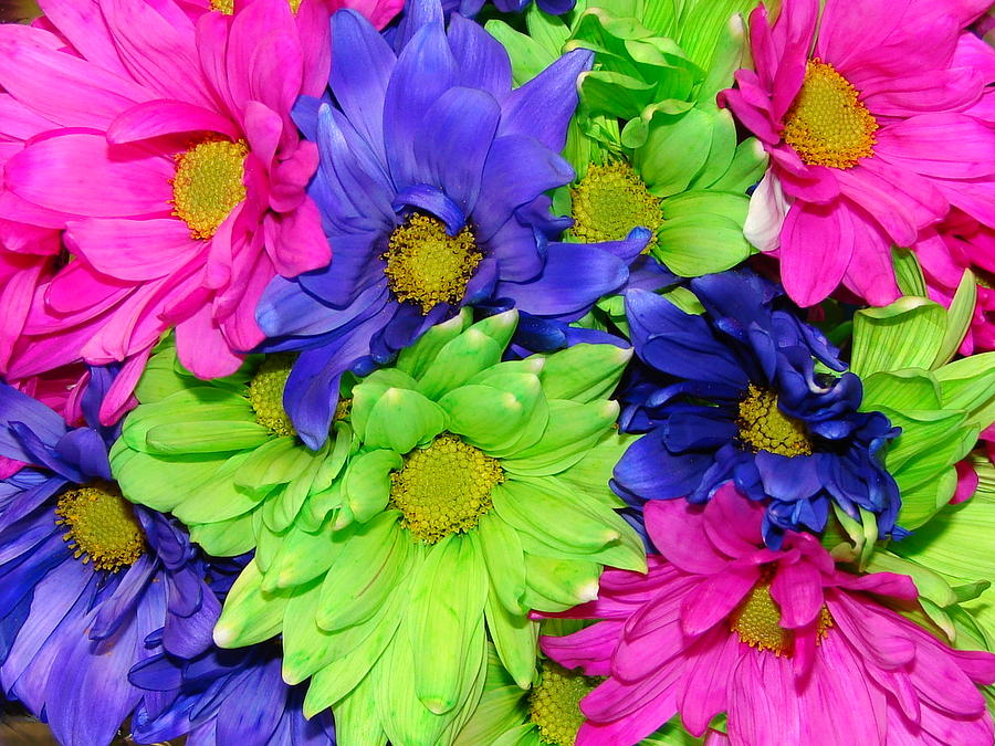 Flowers Photograph - Happiness by J R   Seymour