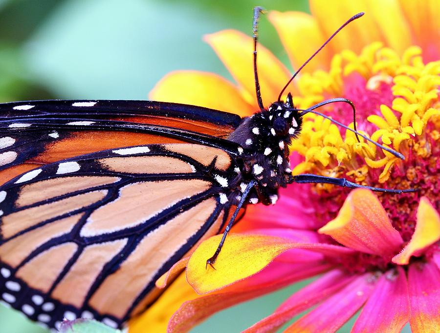 Butterfly Photograph - Happiness by Mitch Cat