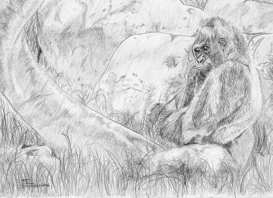 Animals Drawing - Happy Ape by Tito Santiago