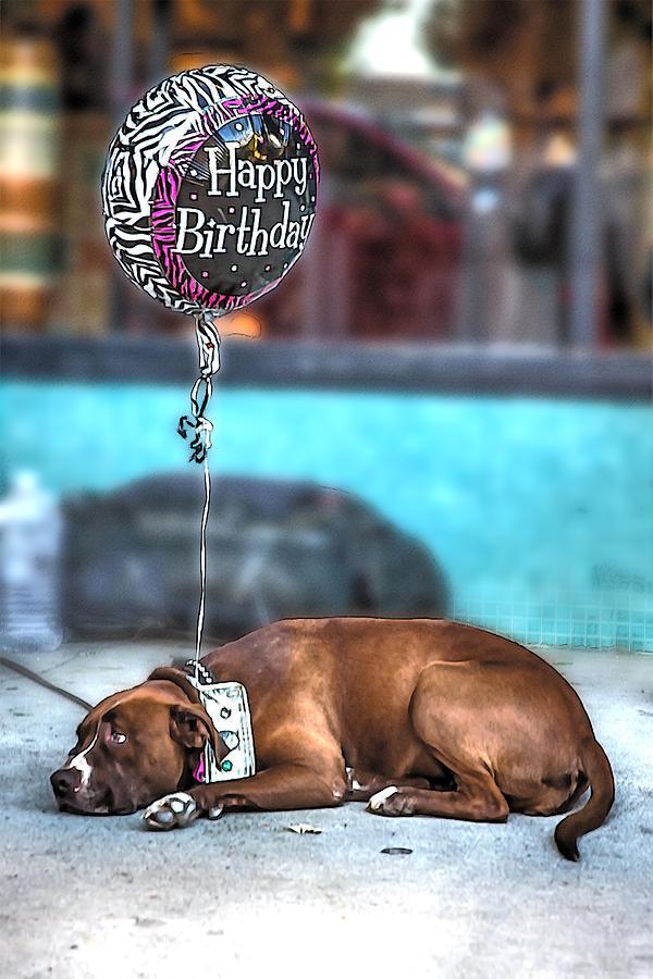 Happy Birthday Dog Digital Art