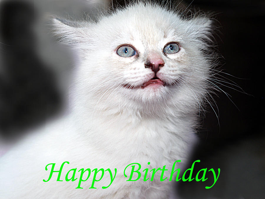 Happy Birthday Kitty Photograph By Bob Johnson