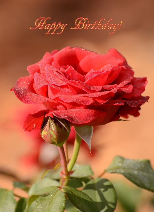 happy birthday rose photograph by zina stromberg