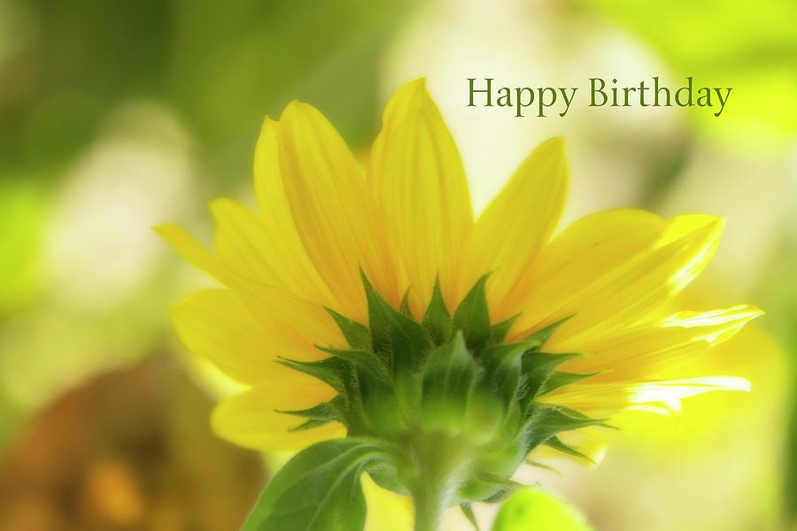 Happy Birthday Sunflower Digital Art By Terry Davis
