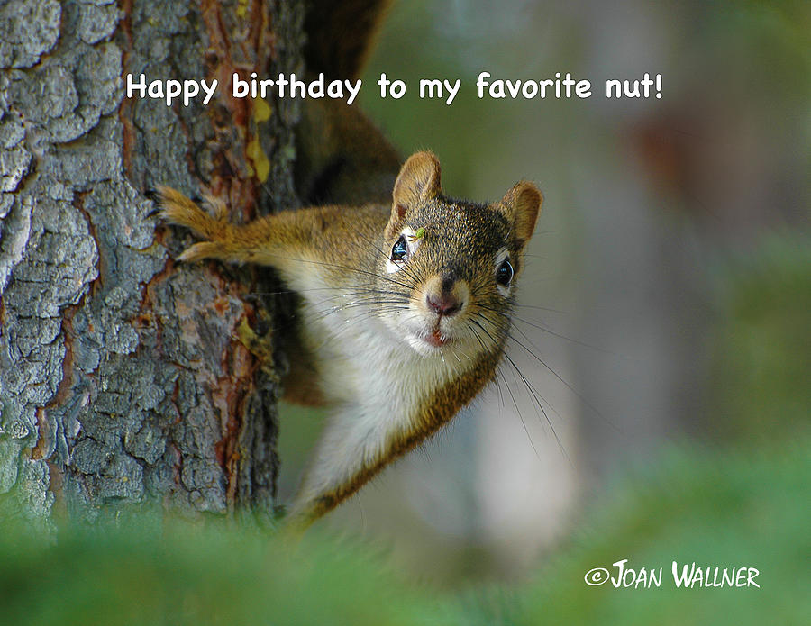 Tree Photograph - Happy birthday to my favorite nut by Joan Wallner