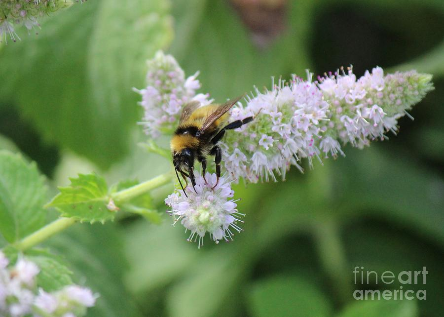 Happy Bumble Bee On Mint