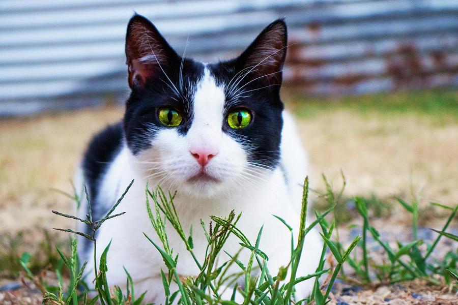 Happy Cat Photograph