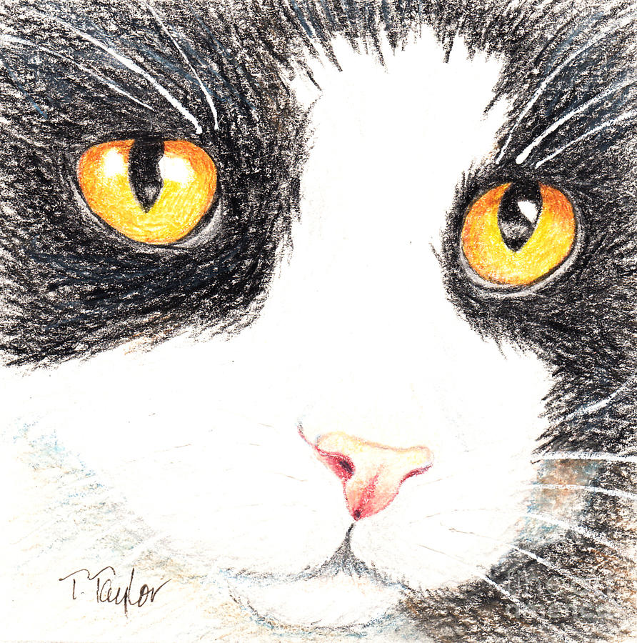 Happy Cat with the Golden Eyes by Terry Taylor