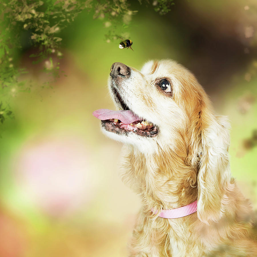 Dog Photograph - Happy Dog Outdoors Looking At Bee by Susan Schmitz