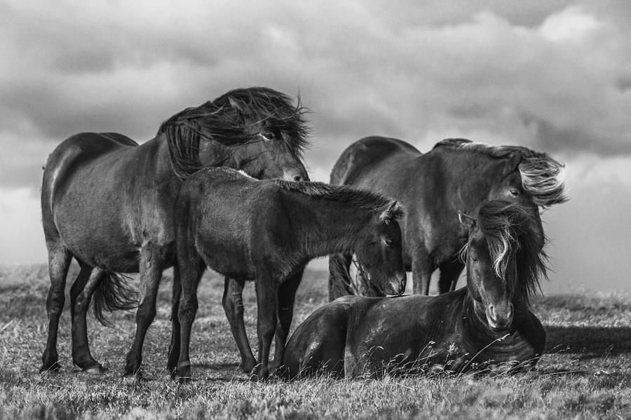 Nature Photograph - Happy Family by Bragi Ingibergsson -