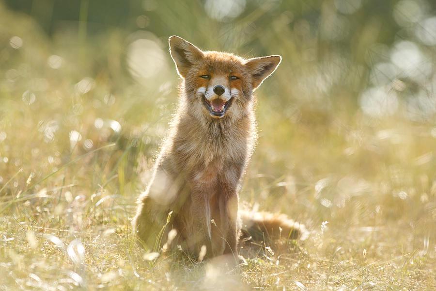 Fox Photograph - Happy Fox Is Happy by Roeselien Raimond