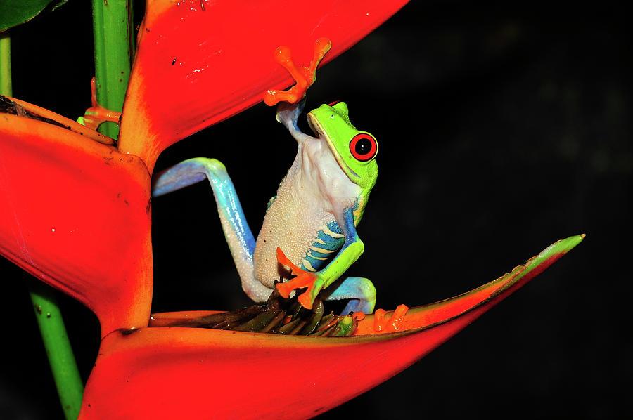 Happy Frog by Harry Spitz