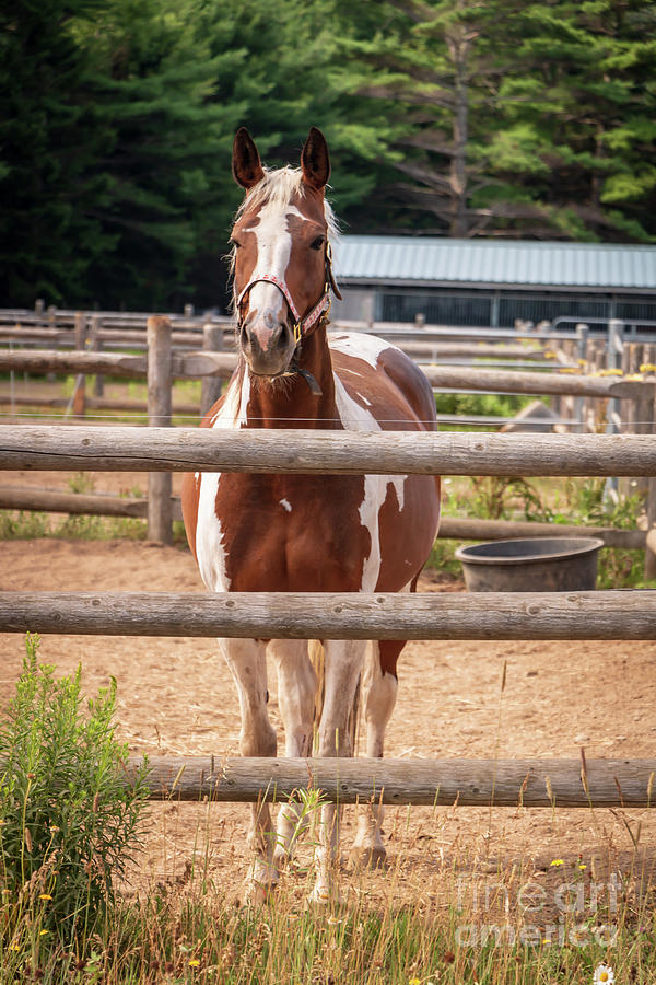 Horse Photograph - Happy Hazel Grace by Elizabeth Dow