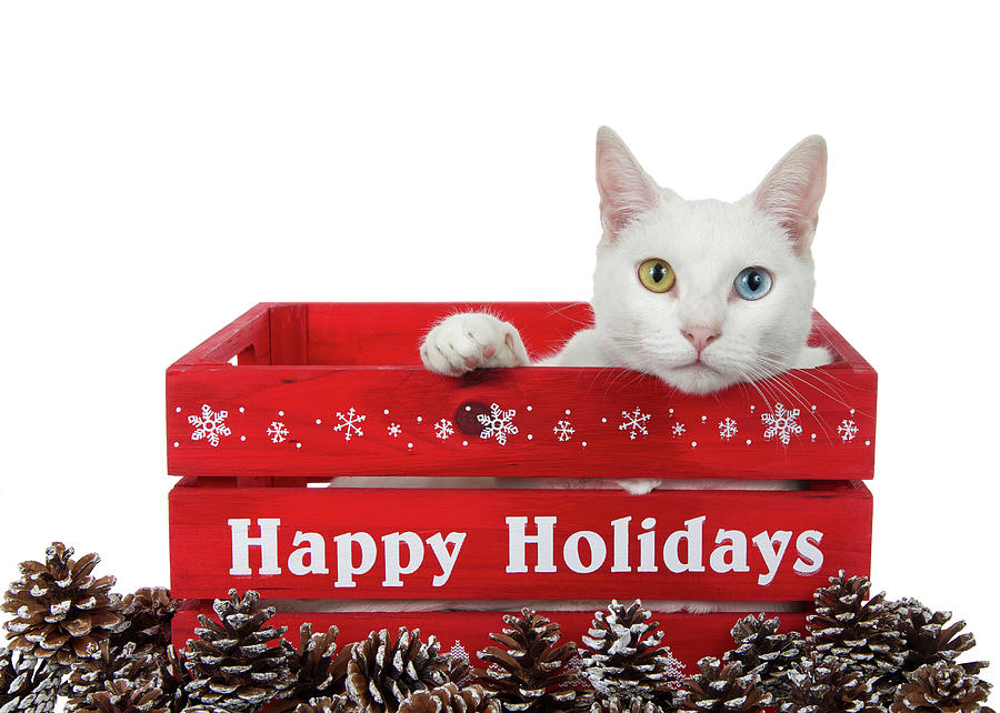 Image result for happy holidays cats images