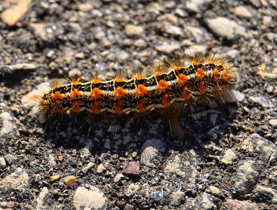 Caterpillar Photograph - Happy by Melanie Guest
