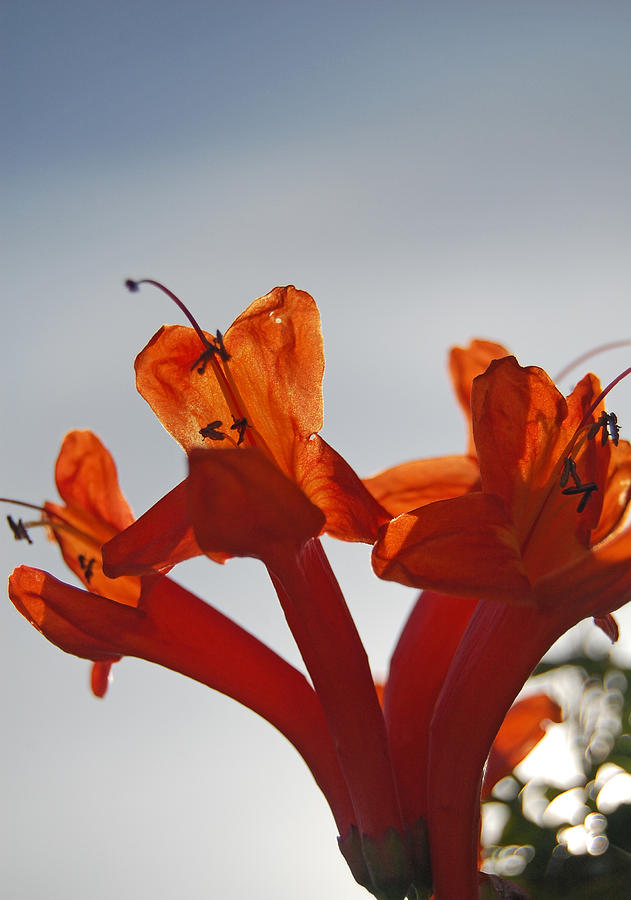 Orange Photograph - Happy Orange by Jean Booth
