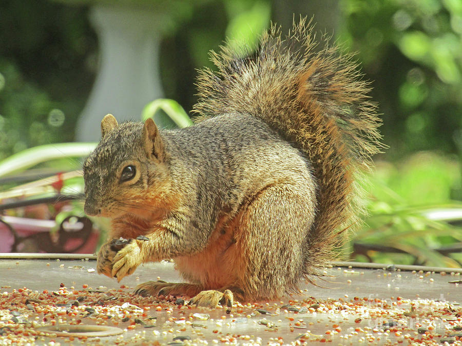 Squirrel Eating Photograph - Happy Squirrel by Fred Jinkins