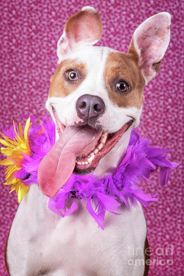Hapy Dog by Stephanie Hayes