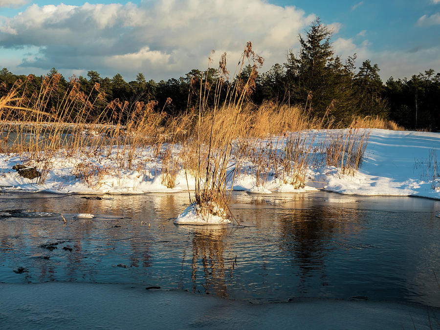 Franklin Parker Preserve Photograph - Hard Frosts And Icy Drafts by Louis Dallara