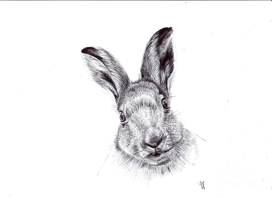 Hare Drawing - Hare by Mark Bloomer