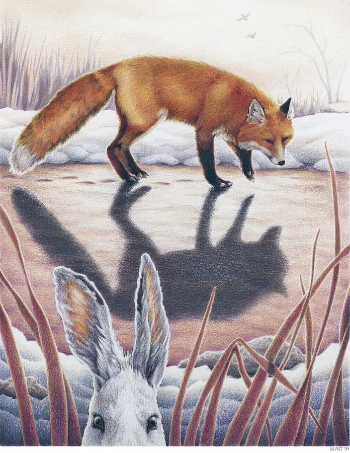 Fox Drawing - Hare Stands On End by Amy S Turner