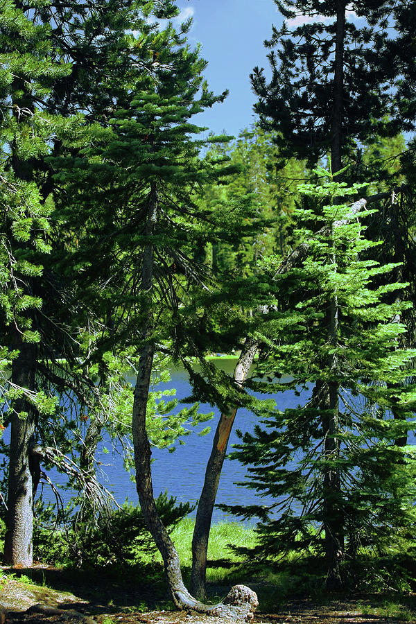 Lassen Volcanic Photograph - Harmony In Green And Blue - Manzanita Lake - Lassen Volcanic National Park Ca by Christine Till