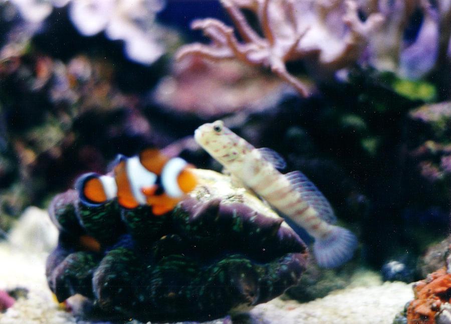 Salt Water Reef Tank Photograph - Harmony by Steve  Heit