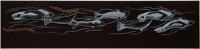 Harp Seals Drawing by Tim Pitsiulak