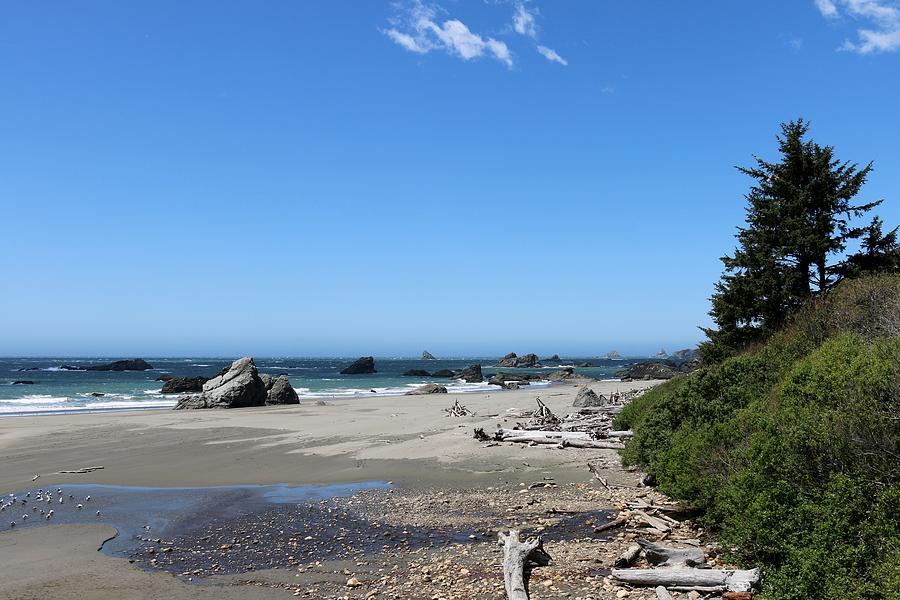 Harris Beach State Park In Oregon Photograph