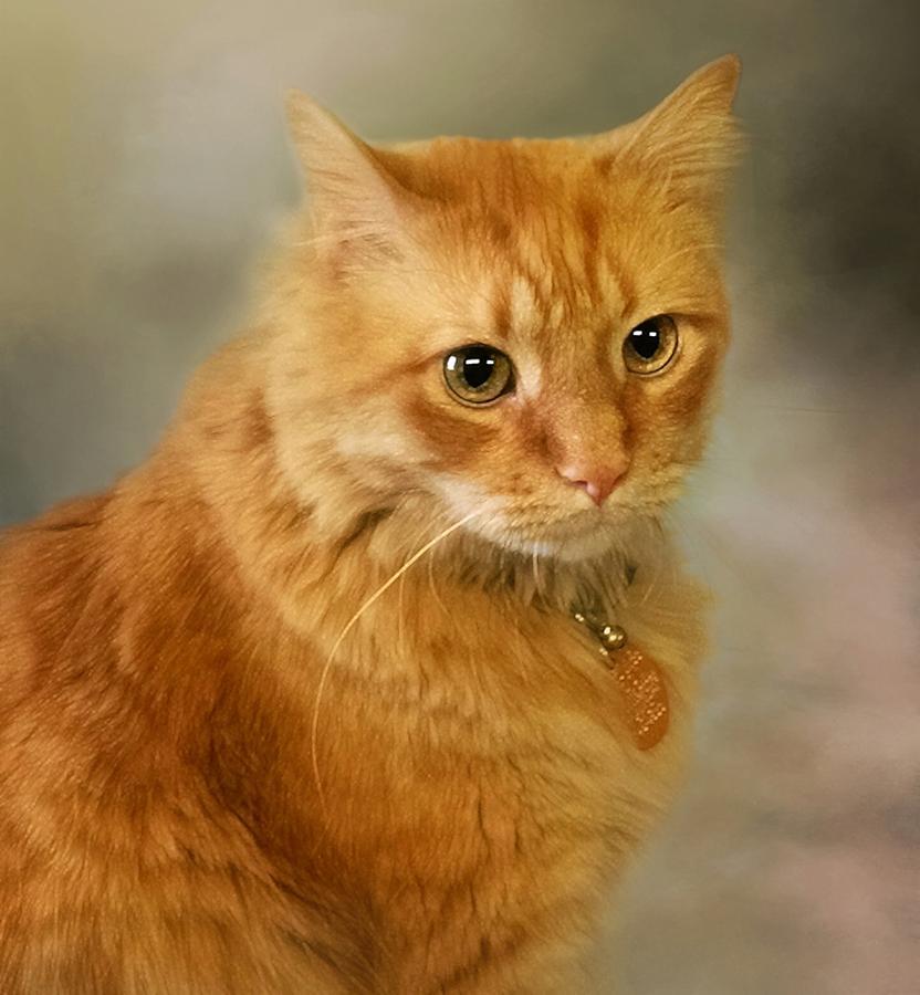 Cat Photograph - Harry by Stephanie Calhoun