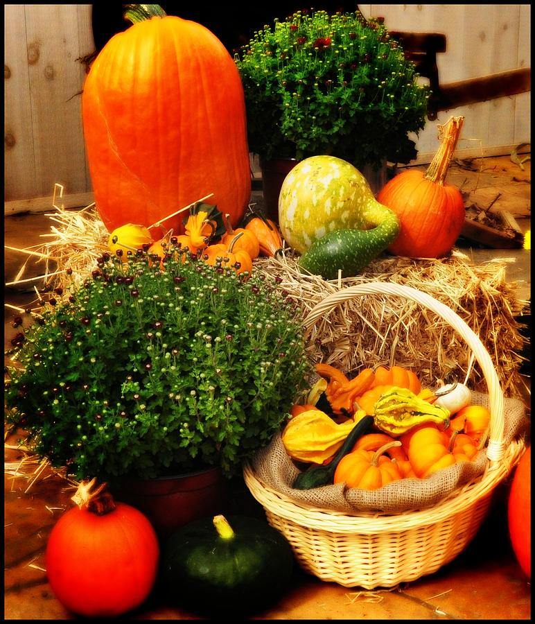 Linvilla Orchards Photograph - Harvest by Bill Cannon