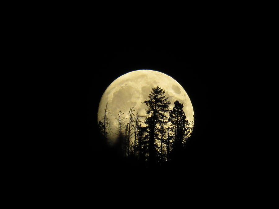 Moon Photograph - Harvest Moon by Karen Shackles