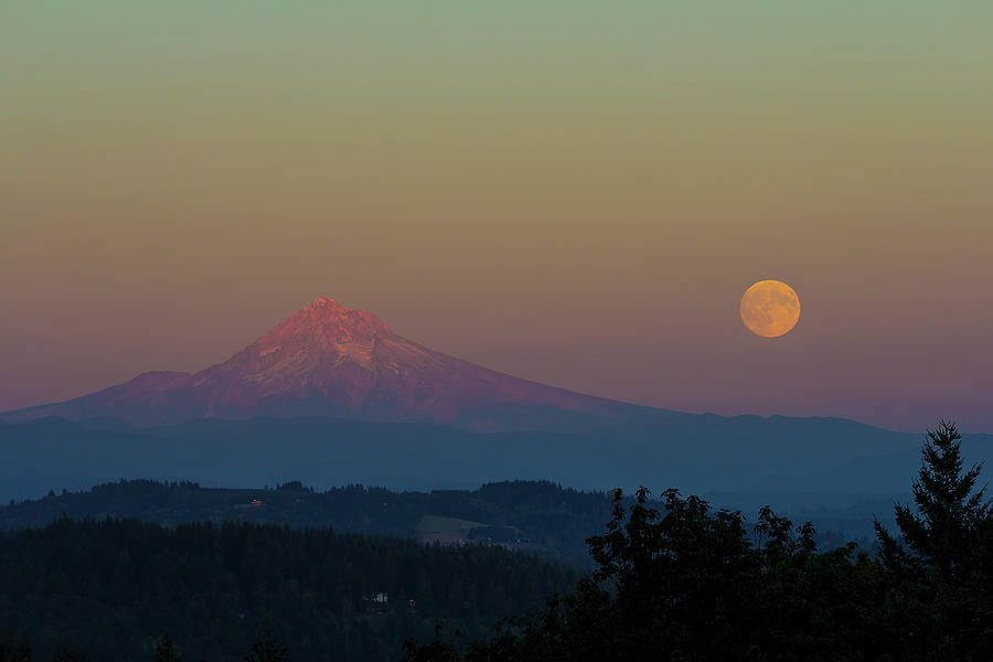 Harvest Moon Photograph - Harvest Moon Rising Over Mount Hood After Sunset by David Gn