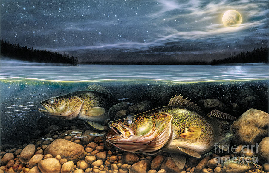 Walleye Painting - Harvest Moon Walleye 1 by JQ Licensing