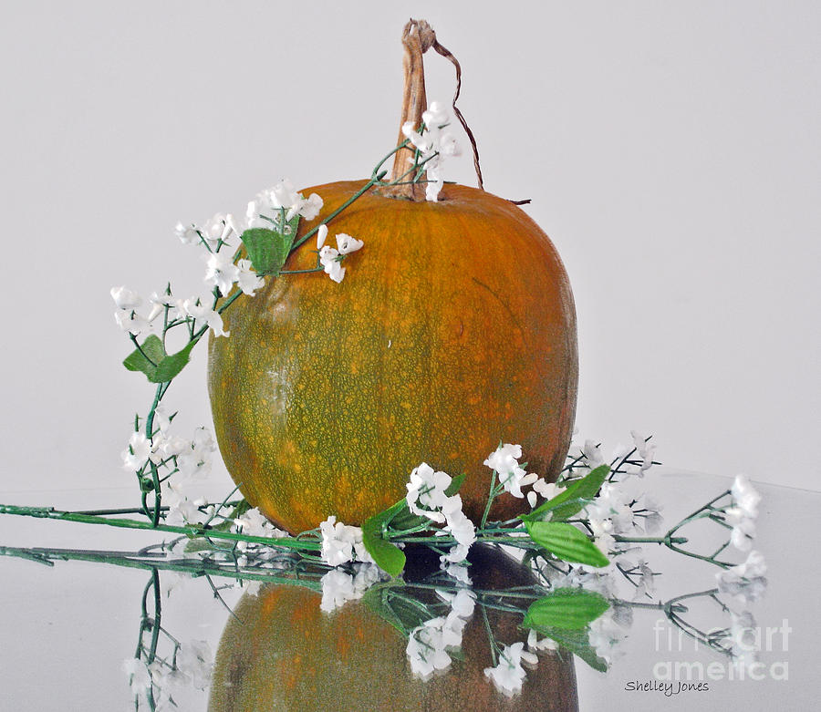 Still Life Photograph - Harvest by Shelley Jones