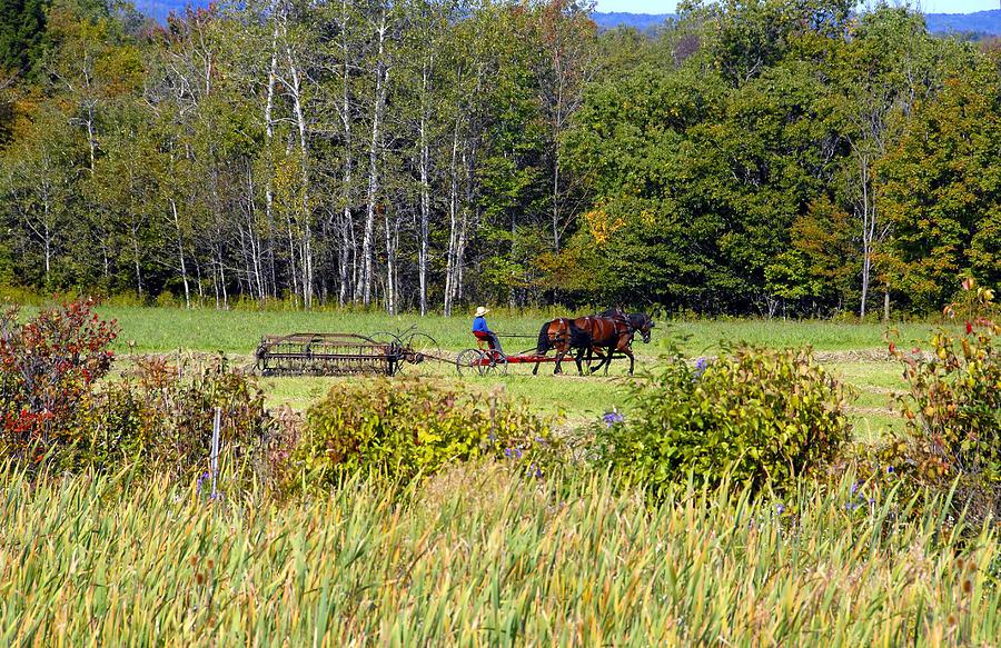 Harvesting Photograph - Harvest Time by David Lee Thompson
