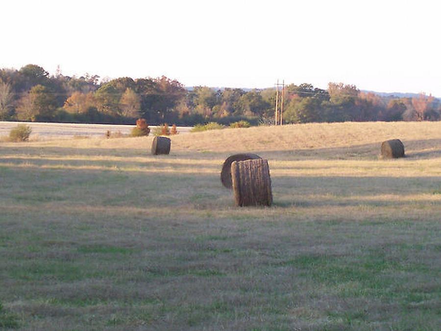 Hey Photograph - Harvest Time by Paula Ferguson