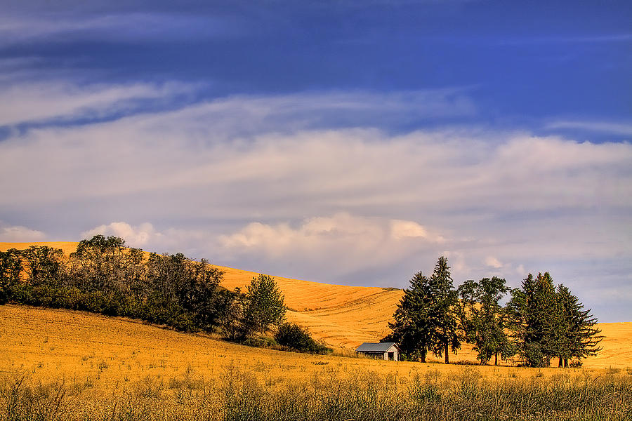 Landscape Photograph - Harvested by David Patterson