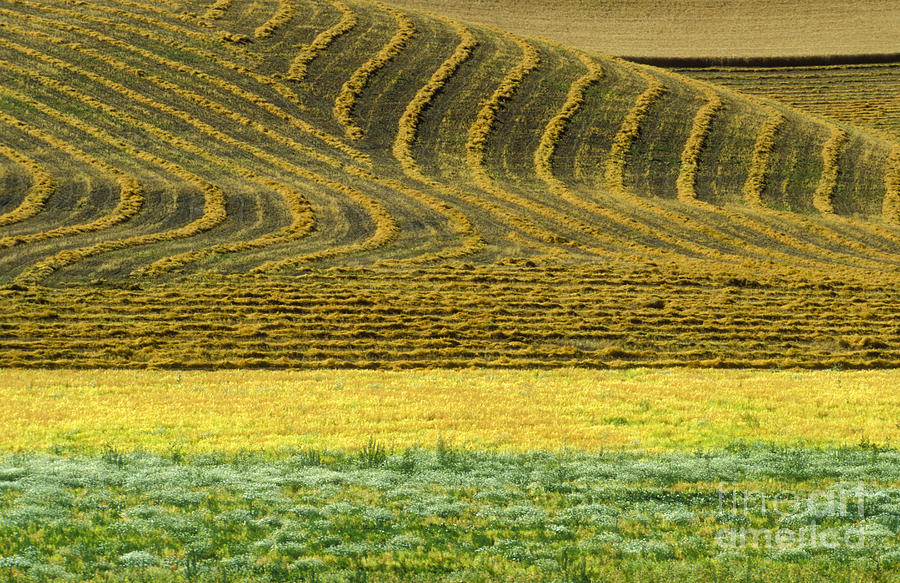 Farmland Photograph - Harvested Fields Of The Palouse by Sandra Bronstein