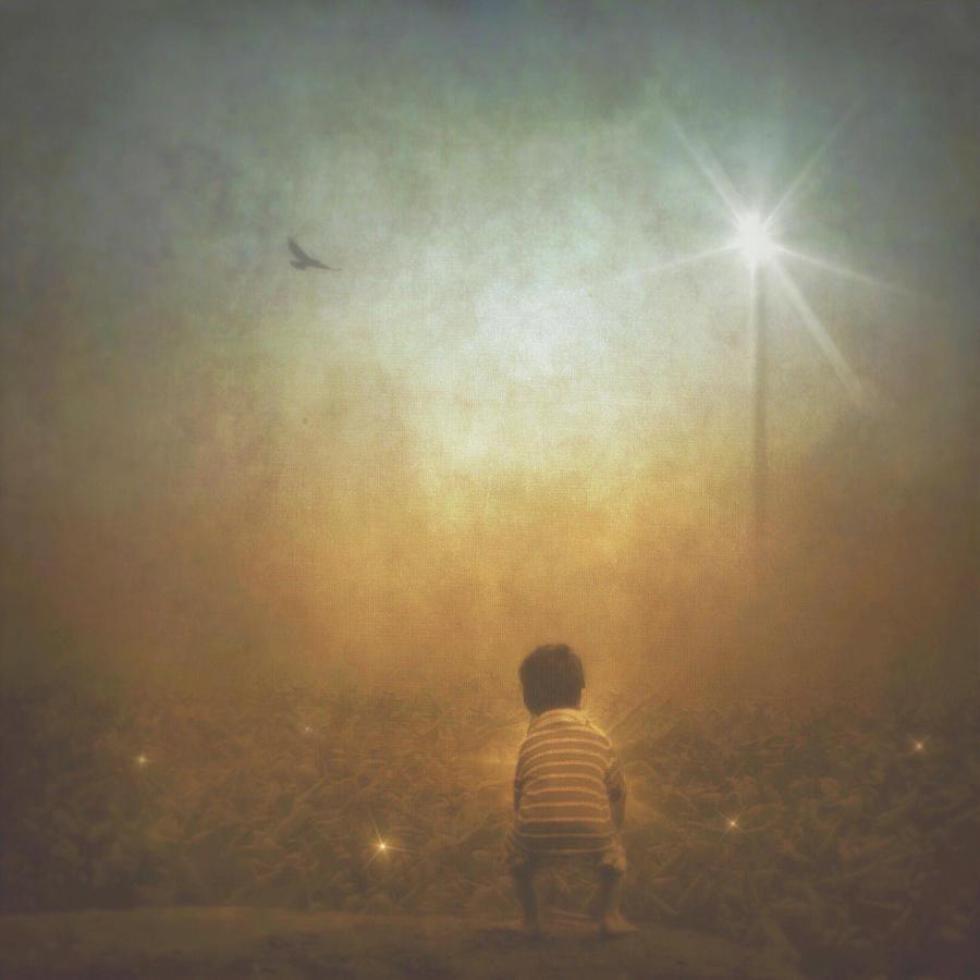 Harvesting Stars by Melissa D Johnston