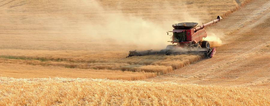 Wheat Photograph - Harvesting Wheat 1336 by Jerry Sodorff