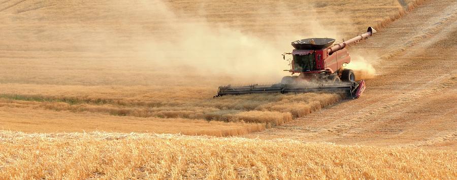 Harvesting Wheat 1336 Photograph
