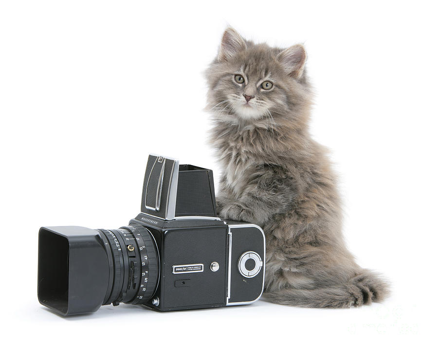 Картинки кота с фотоаппаратом