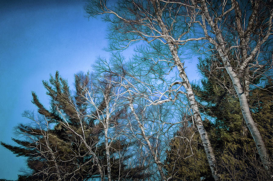 Haunted Trees Photograph by Chroma Photographer
