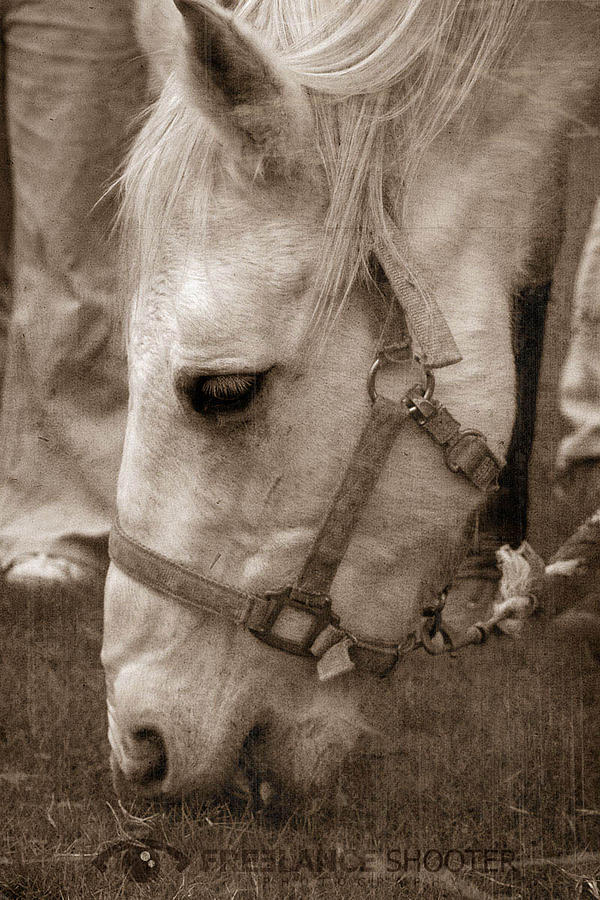 Horse Photograph - Have A Break by Jon Guzman