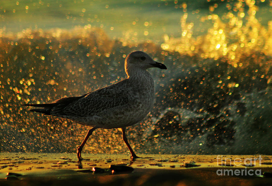 Seagull Photograph - Have A Walk By Th Sea by Angel Ciesniarska